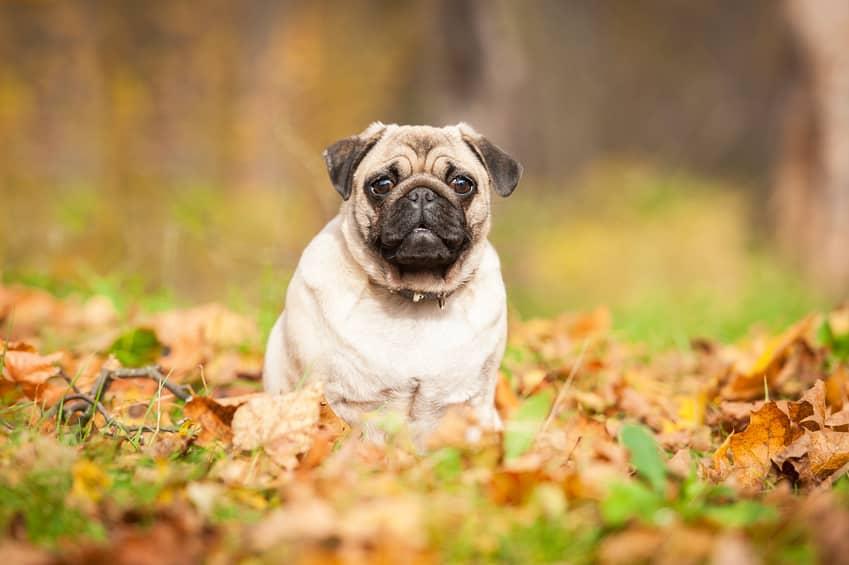 Que faire pour stopper les aboiements de son chien - Loi sur nuisances sonore par aboiement de chiens ...