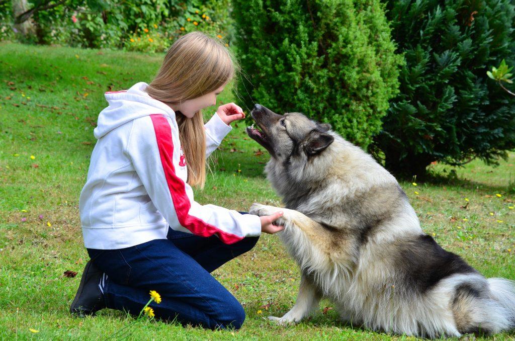education et dressage chien