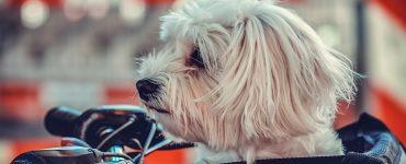 educ chien